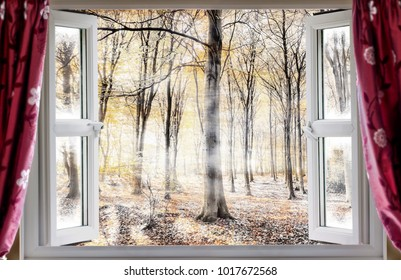 Whispering woodland viewed through an open window with red curtains during a cold autumn morning. Mist and fog slowly waft though the forest trees