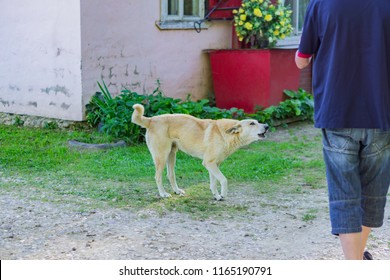 White agressive homless stray dog is going to attack a man on the street