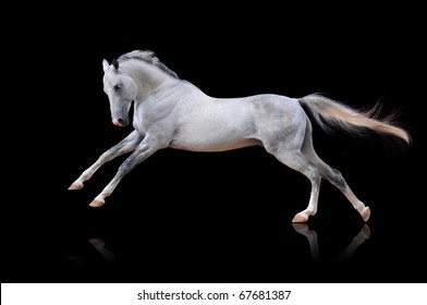 white akhal-teke horse isolated on black