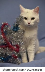 white albino cat on a blue background and New Year's serpentine