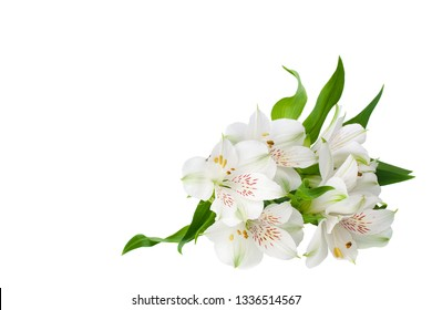 White alstroemeria flowers corner on white background isolated close up, lily flowers bunch for decorative border, holiday poster, design element for banner, lilies floral pattern for greeting card