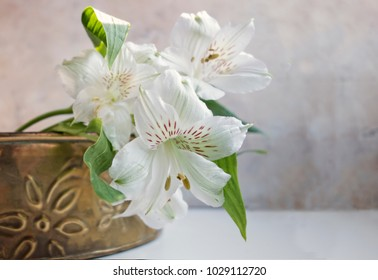 White Alstromeria, also known as Peruvian Lilies or Lily of the Incas, sit in an old brass tin on a white surface with a mottled background.