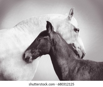 white andalusia mare is closely entwined next to her foal