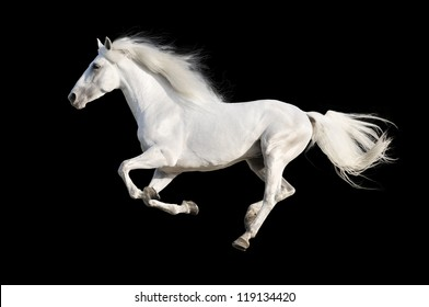 Horses Running Images Stock Photos Vectors Shutterstock