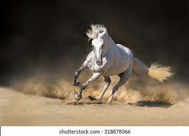 White andalusian horse with long mane run in dust against dark background