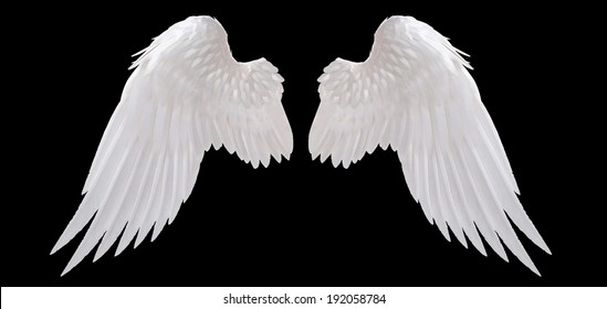 white angel wing isolated - Shutterstock ID 192058784