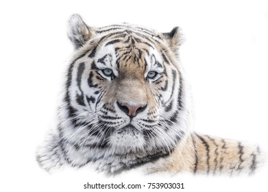 White Animal Portrai