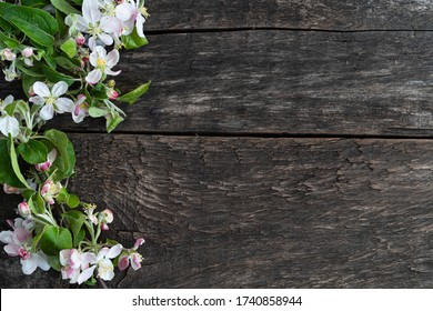 white Apple blossoms on a wooden structured dark Board, space for text
