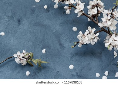 White apricot spring flowers on the grunge dark blue background with copyspace. Seasonal and greeting concept.