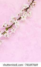 White apricot spring flowers on the grunge pink background with copyspace. Seasonal and greeting concept.