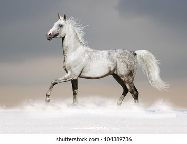 white arab horse in the snow