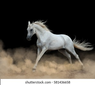white arab stallion over running in dust from darkness