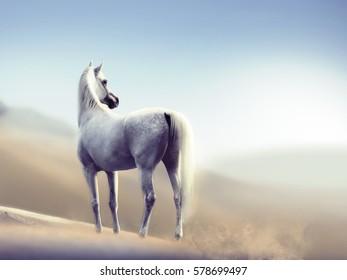 white arabian horse in the desert monochrome portrait