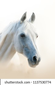 White arabian horse portrait, vertical