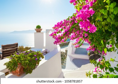 White architecture on Santorini island, Greece. Beautiful terrace with pink flowers, sea view.