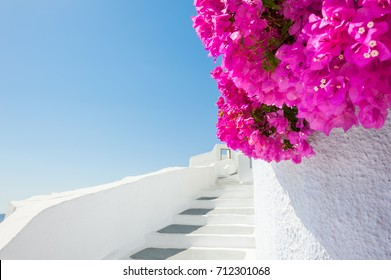 White architecture and pink flowers, Santorini island, Greece.