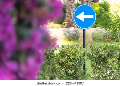White arrow on blue road sign with tree in background