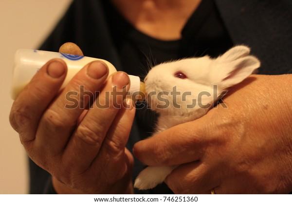 White baby bunny