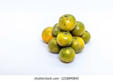 With white background, Calamondin, also known as calamansi or limau kasturi in Malay.It is an economically-important citrus predominantly cultivated in  Malaysia.