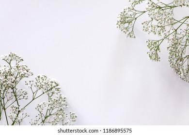 White background copy space with white dried wild flowers