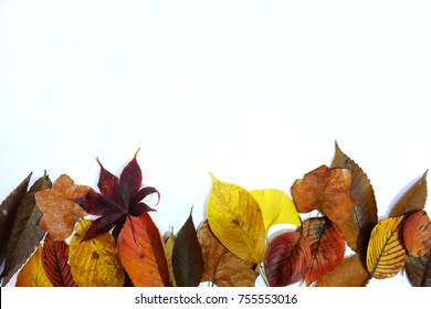 a white background with fallen leaves