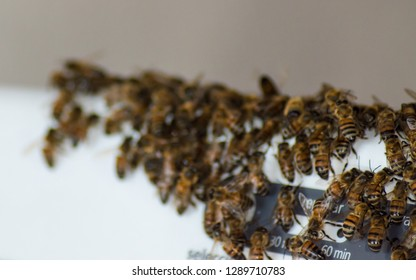 White background with hony bees