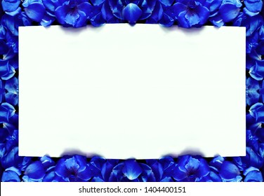 white background surrounded by royal blue flowers