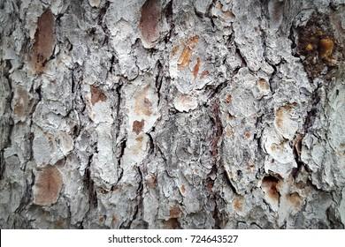 White bark in full frame