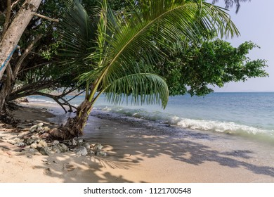 White beach and a palmtree on Koh Chang