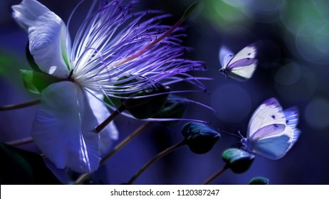White beautiful butterflies against a background of tropical flowers. Natural summer spring artistic macro image. A beautiful back light.