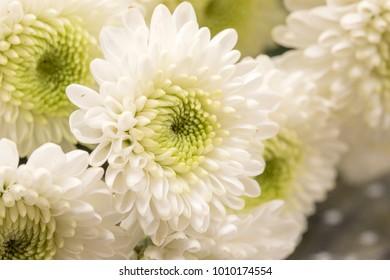 White beautiful daisy flowers