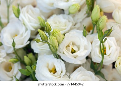 White beautiful Eustoma flowers , Lisianthus, tulip gentian, eustomas. Full frame background.