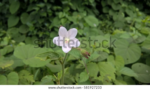 white beautiful forest flower