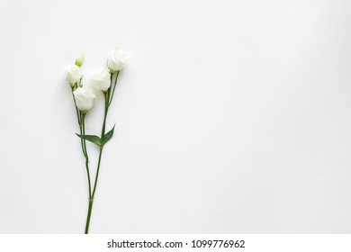 White beautiful roses on white marble. Top View.
