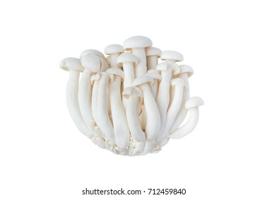 White beech mushrooms or Shimeji mushroom isolated on white background