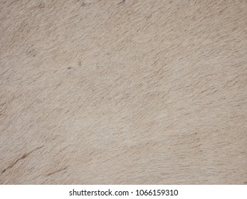 White beef skin and fur texture as background.