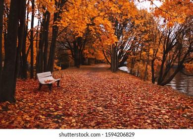 white bench in a dark autumn park