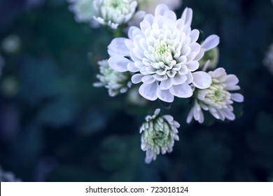 white big flower on dark green background. Autumn mystery photo with cold colors