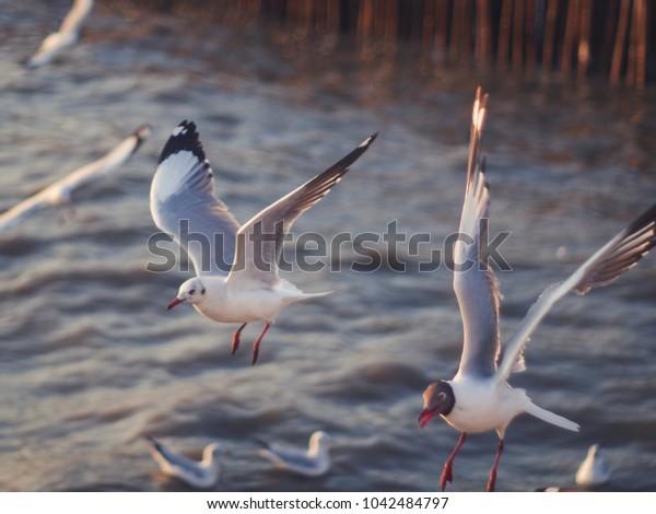 White bird 04