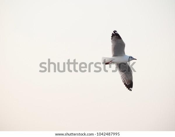 White bird 09