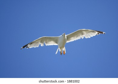 White bird against blue sky