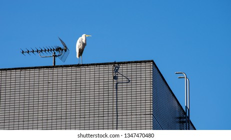 white bird and civilization is coexisting