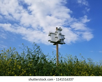 White bird condo on a wooden pole in a field of wildflowers, framed by a blue sky with clouds. Perspective horizontal view.