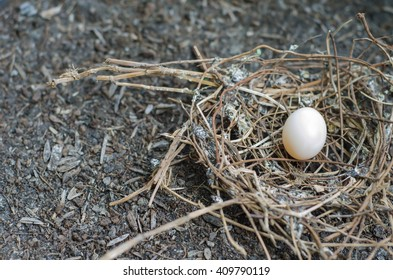 White bird egg in a nest on the ground.