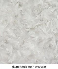 White bird feathers background
