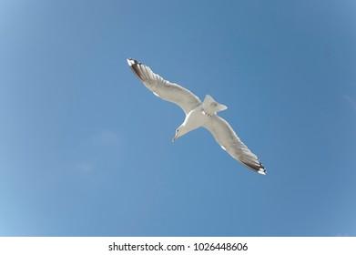 White Bird Flying in a Blue Sky