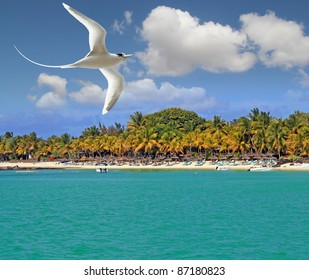White bird flying over tropical beach Mauritius