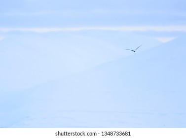 White bird over the snow