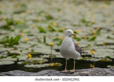 white bird seagull