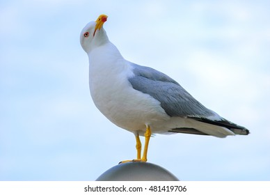 white bird seagull